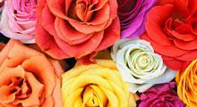 Цветы и доставка цветов